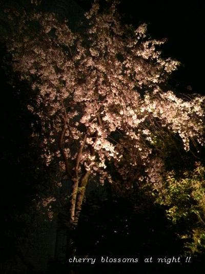 Cherry_blossoms_at_night