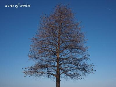 A_tree_of_the_winter_2