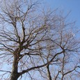 A tree of the winter